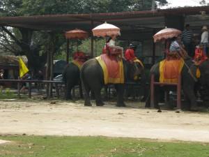 Auf dem Elefanten