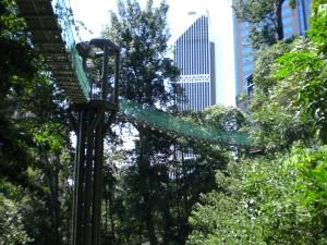Regenwald beim KL-Tower mit Baumkronen-Weg