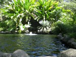 Wasser im Botanischen Garten