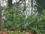 Wasserpflanze in Natura