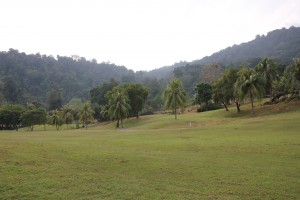 Golfplatz mit Dschungel im Hintergrund