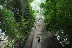 Signalbaum