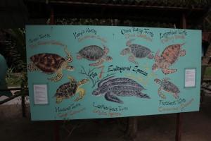 Schildkröten-Station