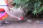 Flora füttert das Hirschferkel
