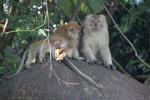 Wir treffen einige Affen