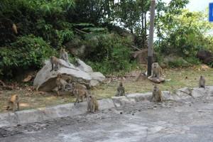 Affen an der Strasse
