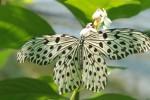 Schmetterling im Park
